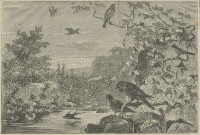 Bird Notes, Sunday Magazine, 1868, PL4919