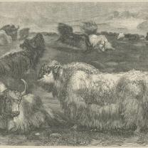 The Yak in France, Once a Week Vol.1, 1859, PL4878