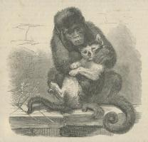 Our Pets, Once a Week Vol.2, 1860, PL4880