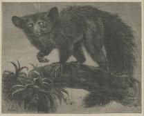 The Aye Aye, Once a Week Vol.12, 1865, PL4898
