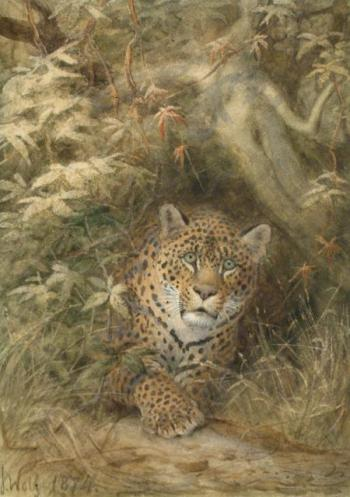 The Panther, 1874, watercolour, WD452