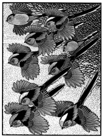 Zephyr of Long-tailed Titmice I, Of a Feather - An Avian Alphabet, Colin See-Paynton